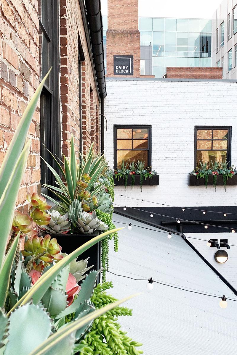 exterior-plant-design dairy block denver co